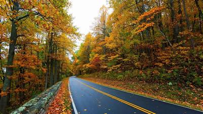 秋天树叶为什么会变黄?树叶变黄的原因
