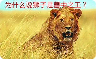 为什么说狮子是兽中之王?