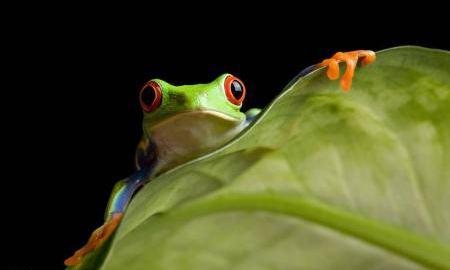 为什么说青蛙有功也有过?